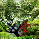 Dogwood and Rhodies by aussiedi