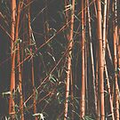 Bamboo Orange  by Ingrid Beddoes