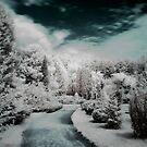 Erdotelek more...  (Infrared) by zolim