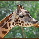 Giraffe by Donna Vanderspek