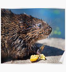 Ratty Poster