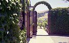 To the vines... Viansa  by John Schneider