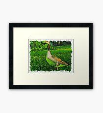 Goose Bird Framed Print