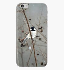 Chilly Chick-a-Dee iPhone Case