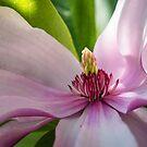 Magnolias close-up by 29Breizh33