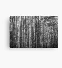 Bark In Fog Canvas Print