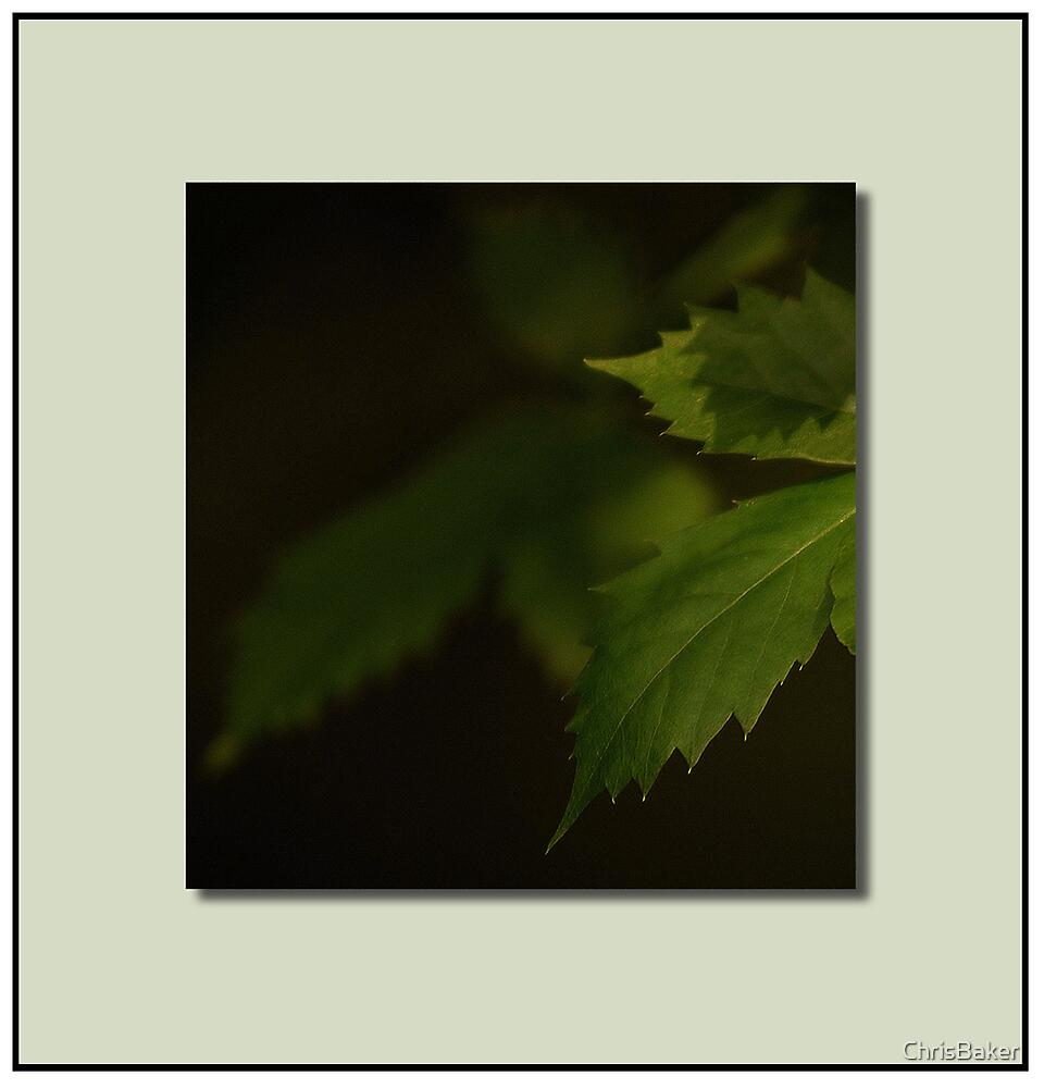 Ivy Leaf       Light and Shadow by ChrisBaker