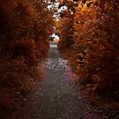 the lonely path  by 1chick1