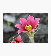Macro Garden Photographic Print