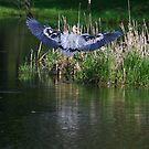 Landing Blue by Deborah  Benoit