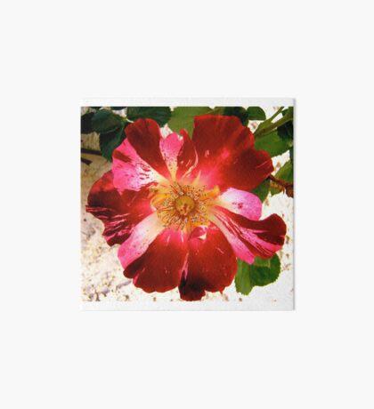 Rose Art Board
