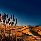 """"""" Parting Reeds """" by canonman99"""