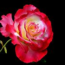 DOUBLE DELIGHT RED ROSE by RoseMarie747