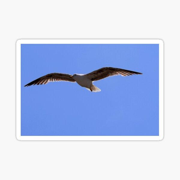 A juvenile herring gull  Sticker