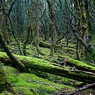 The Mossy Forest by strangers