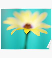 Yellow African Daisy on Brilliant Green Poster