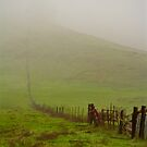 Country Fence by Barbara  Brown