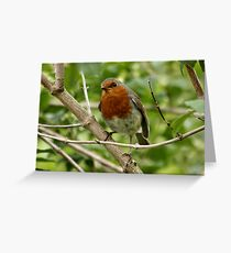 Red Red Robin Greeting Card