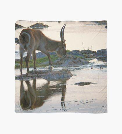 A REFLECTION - THE WATERBUCK – Kobus ellipsiprymnus Scarf