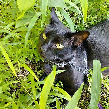 My Beautiful Boy Laying in the Grass by amberwayne52