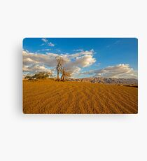 Dead Acacia tree in the Aravah Desert, Israel Canvas Print