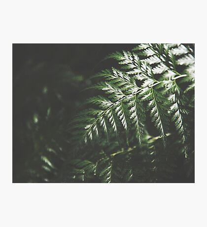 Forest Mood Photographic Print
