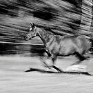 On the Run by Lars Klottrup