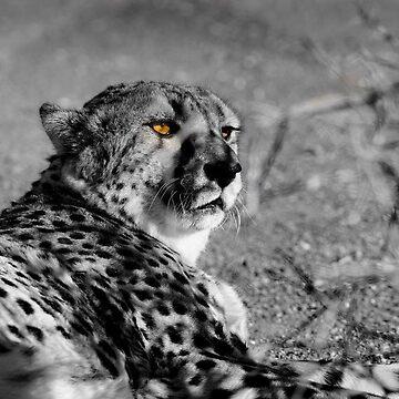 Cheetah black and white by brians101