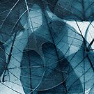 delicate in blue by Ingrid Beddoes