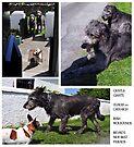 Irish Wolfounds triptych by ragman