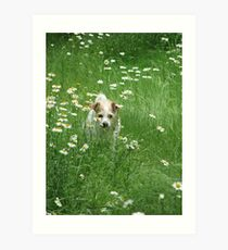 ~Decker, In the Daisy Patch~ Art Print