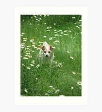 ~Decker, In the Daisy Patch~ Art Print