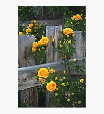 Renegade Roses Photographic Print