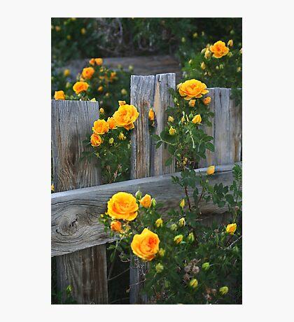 Renegade Roses Photographic Print