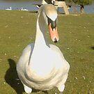 swansea swan by John farthing