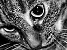 Cat's Eyes by Shelly Harris