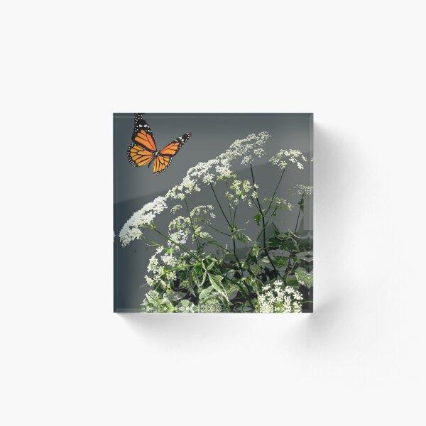 MONARCH BUTTERFLY & LACE FLOWERS   Acrylic Block