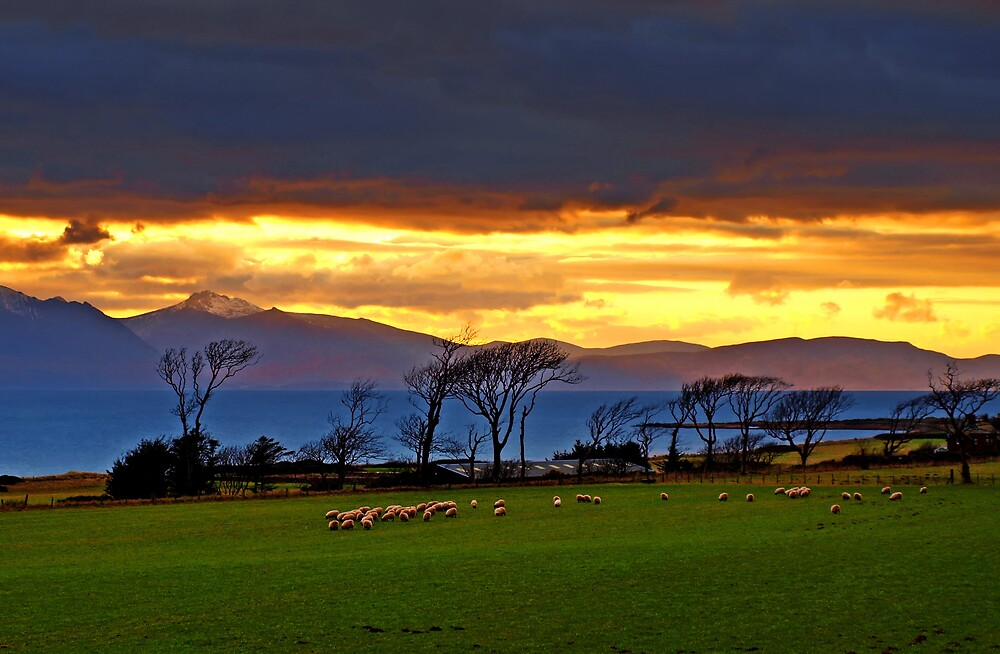 Sheep may safely graze by Eddie Dowds