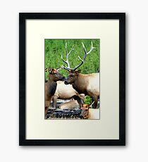 Rendezvous Royalty by Rob Pitzer Framed Print