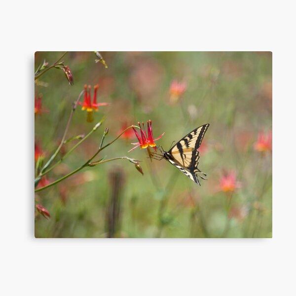 Swallowtail in Scarlet Dream Metal Print
