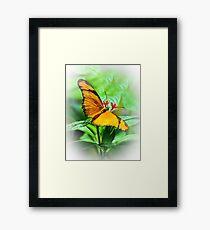 Orange Butterfly Wings Spread Framed Print