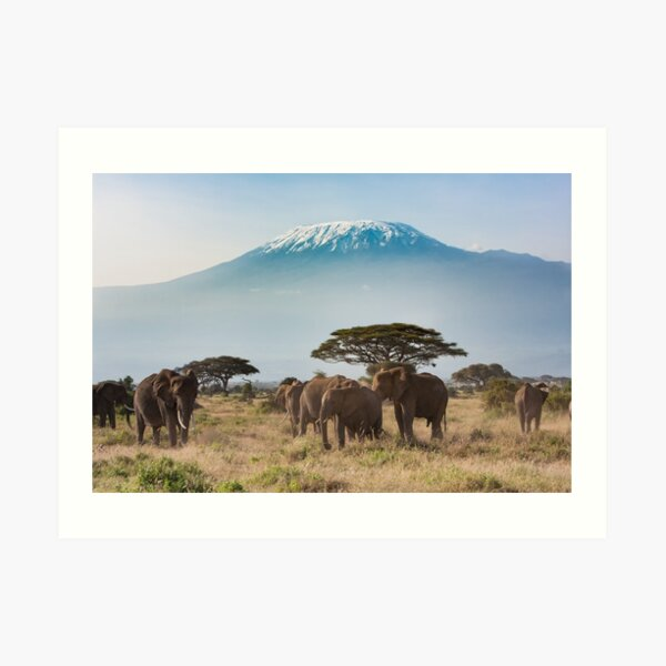 Elephants of Mt.Kilimanjaro cards and other designs Art Print