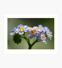 Forget-Me-Not with Tears Art Print