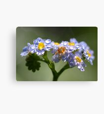 Forget-Me-Not with Tears Canvas Print