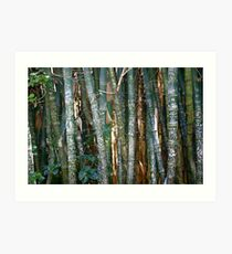 The Marked Bamboo Art Print