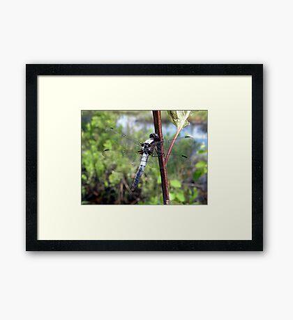 My Dragonfly Buddy Framed Print