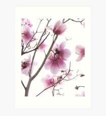 Pink magnolia flowers Art Print