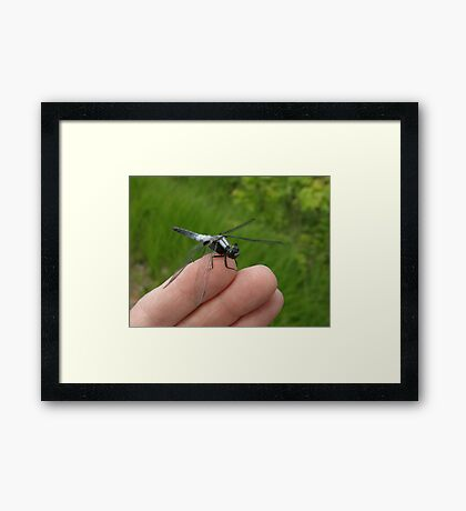 My Dragonfly Buddy III Framed Print