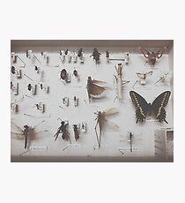 { entomology } Photographic Print