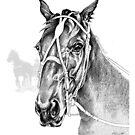 Sir Castleton (NZ) - Standardbred by Patricia Howitt